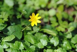 Pflanzen Im Mai : vorsicht gesund ~ Buech-reservation.com Haus und Dekorationen