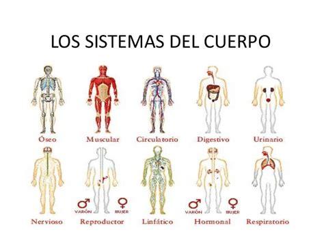 Los Sistemas del Cuerpo