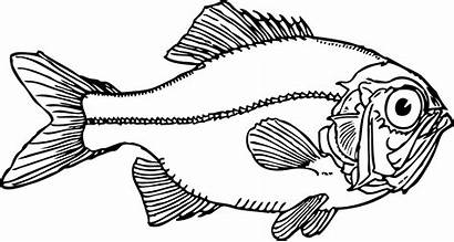 Fish Coloring Pages Draw