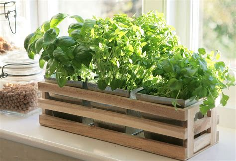 Window Sill Herb Garden Box by Details About Kitchen Herb Window Planter Box Wooden