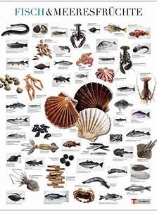 Bilder Mit Fischen : die namen von w rmern in fisch ~ Frokenaadalensverden.com Haus und Dekorationen