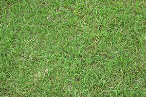 types  gainesville lawn grasses  choose