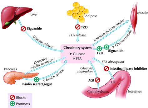 oral antihyperglycemic therapy  type  diabetes