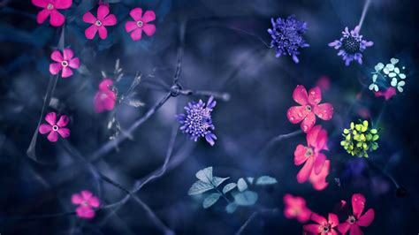 flowers background  wallpaper