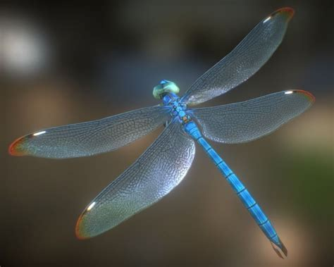 Animated Dragonfly Wallpaper - animated dragonflies images search
