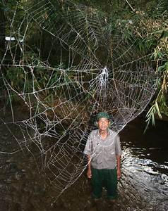 Photos: World's Biggest, Strongest Spider Webs Found
