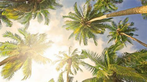 Palm Background Palm Tree Desktop Wallpaper 183