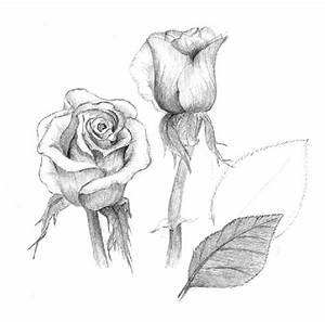 Rose Flower Drawing Wallpapers | Beautiful Flowers Wallpapers