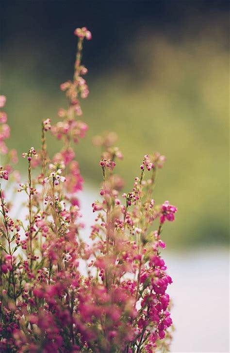 pretty wild flowers pictures   images