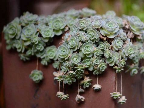 succulents types pictures 25 best ideas about types of succulents on pinterest cactus types names of succulents and