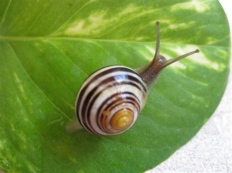 Snails Snails Snails  A Gallery On Flickr