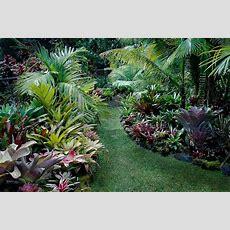 17 Best Buy Bromeliad Guzmania And Aechmea Plants Images