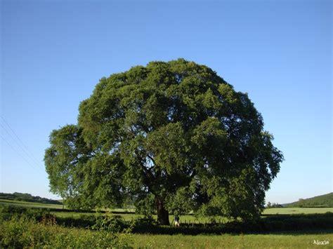 l orme de martailly lès brancion saône et loire krapo arboricole