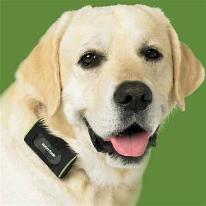 zoombak gps dog tracking system the green head With dog tracking system