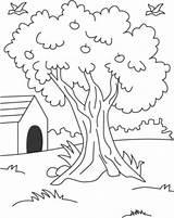 Coloring Primavera Arbol Tree Colorear Dibujo Baum Patio Disegni Casa Trasero Dibujar Nature Ausmalbilder Bing Casas Malvorlagen Konabeun Relacionados Kinder sketch template