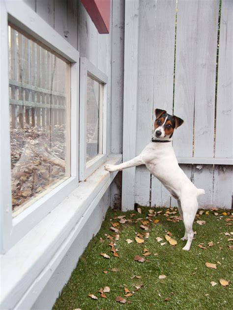 Tips For A Petfriendly Home Hgtv
