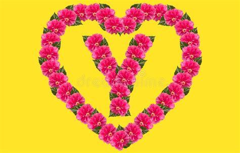 alphabet  design  pink hibiscus flower  love shape  isolated background china rose