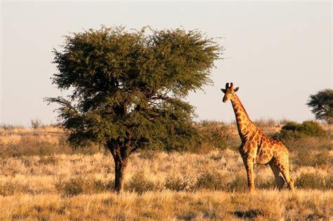 bildergalerie namibia reise