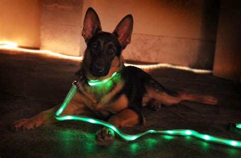 special led dog collar wishforpets