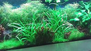 Aquarium Pflanzen Schnellwachsend : pflanzen aquarium youtube ~ Frokenaadalensverden.com Haus und Dekorationen