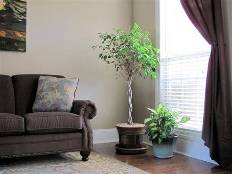 F&f Home Decor : Fresh Indoor Plants Decoration Ideas For Interior Home