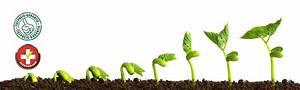 Led Grow Erfahrung : led pflanzenbeleuchtung und pflanzenlampen in eurem grow light shop gr sste auswahl top ~ Watch28wear.com Haus und Dekorationen
