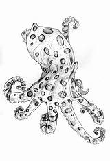 Octopus Ringed Coloring Sketch Sketches Designlooter Scarf Drawing Mcqueen Alexander Granato Anthony sketch template