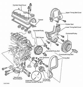 2003 Honda Civic Serpentine Belt Routing And Timing Belt Diagrams