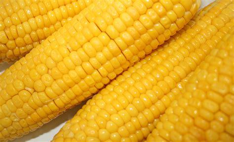 corn on the cob 187 corn on the cob any kitchen will do