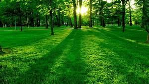 Rasen Düngen Bei Sonne : tapete park rasen gras b ume sonne hd widescreen high definition vollbild ~ Indierocktalk.com Haus und Dekorationen