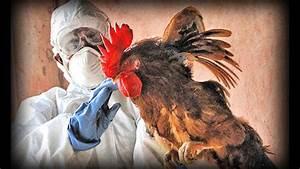 Avian Flu  Full Documentary