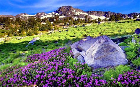 bureau gratuit arrière plan de bureau gratuit printemps 28 images