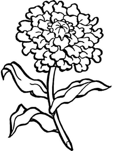 carnation flower coloring pages   print