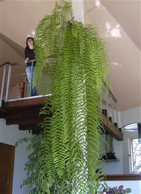 plante salle de bain sans lumiere une plante d interieur qui n a pas trop besoin de lumi 232 re r 233 solu