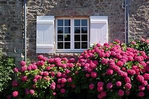 Arbuste Plein Soleil Longue Floraison : arbuste vivace liste ooreka ~ Premium-room.com Idées de Décoration