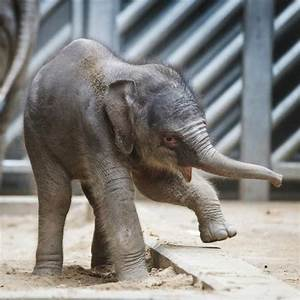 UPDATE! Prague Zoo's Baby Elephant Learning to Use Trunk ...
