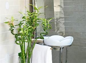 Bathroom plants 10 all time favorites bob vila for Bamboo in the bathroom