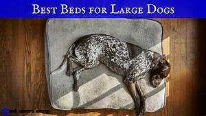 The best large dog beds for the money pet lovers world for Best dog bed for the money