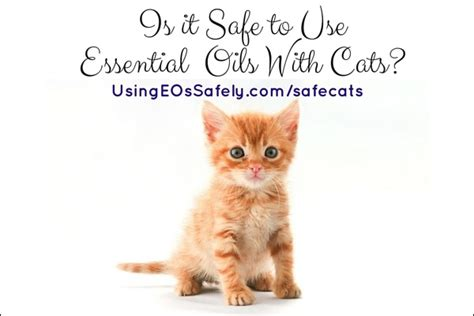 cats essential oils is it safe to use essential oils with cats using essential oils safely