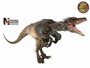 Museum of Natural History Giant Dinosaur Raptor Wall Sticker