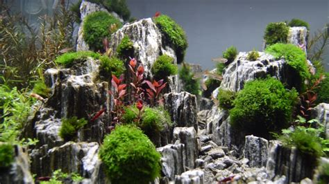aquascaping with rocks aquascape planted aquarium with glimmer wood rock day 3