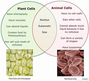 Plant Vs Animal Cells Venn Diagram For Educational