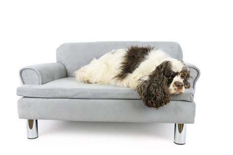 canapé chien canapé pour chien zolia liloe panier et corbeille