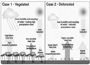 U2013climatic Effects Of Tropical Deforestation On Water