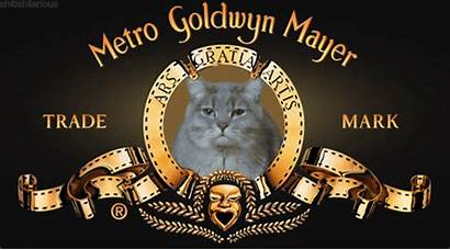 Gifs Metro Goldwyn Mayer Mgm Lion Cat