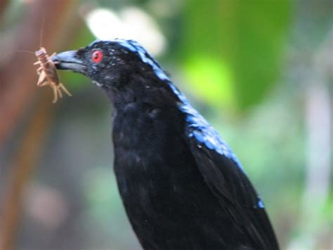 top 28 can birds get worms birds eating worms bugs and
