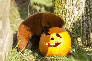 Idée Pour Halloween : 7 id es pour f ter halloween en lorraine lorraine tourisme ~ Melissatoandfro.com Idées de Décoration