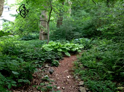 woodland gardening you asked for the long view part 2 carolyn s shade gardens