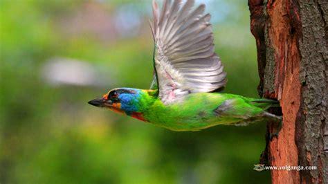 beautiful birds wallpapers  volganga