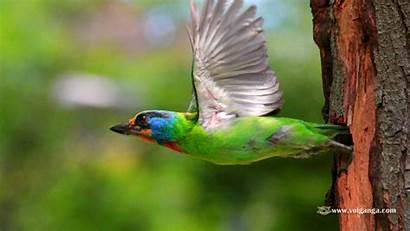Birds Wallpapers Amazing Volganga